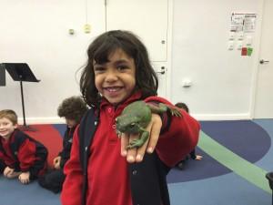 Freddo the frog
