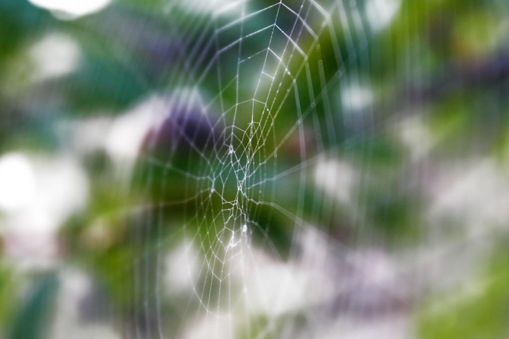 Orb_weaver_spider_web02