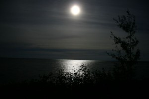 moonlight-night--large-msg-117807345376