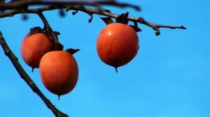 why pomegranates?