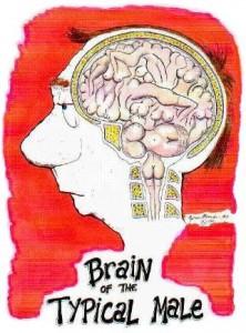 BrainTypicalMale