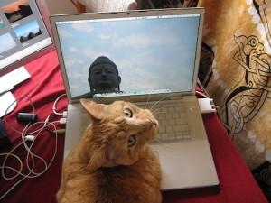 Computer_Using_Cat20120627090009