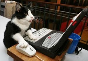 laptop kitty