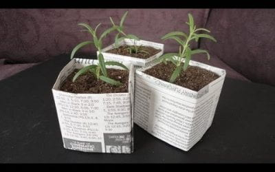Home-made paper seedling pots