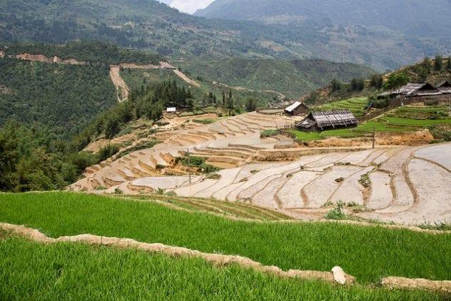 image of Terraced Rice Fields in Sapa, Vietnam